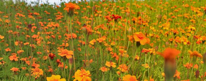 Blumen.jpg